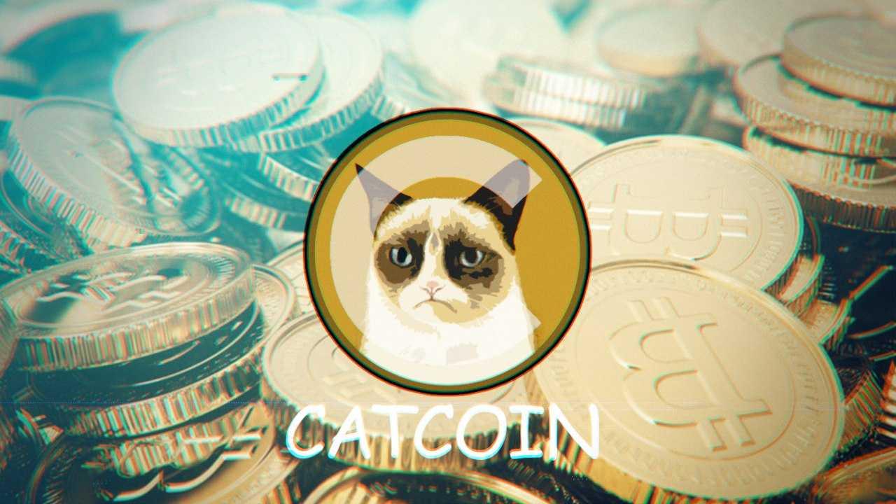 13 биткоинов за несколько котов