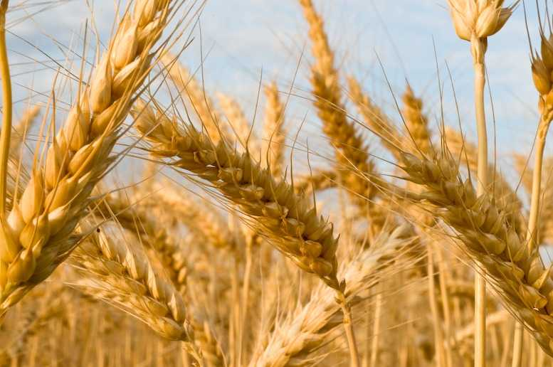 Децентрализованные технологии в сельском хозяйстве