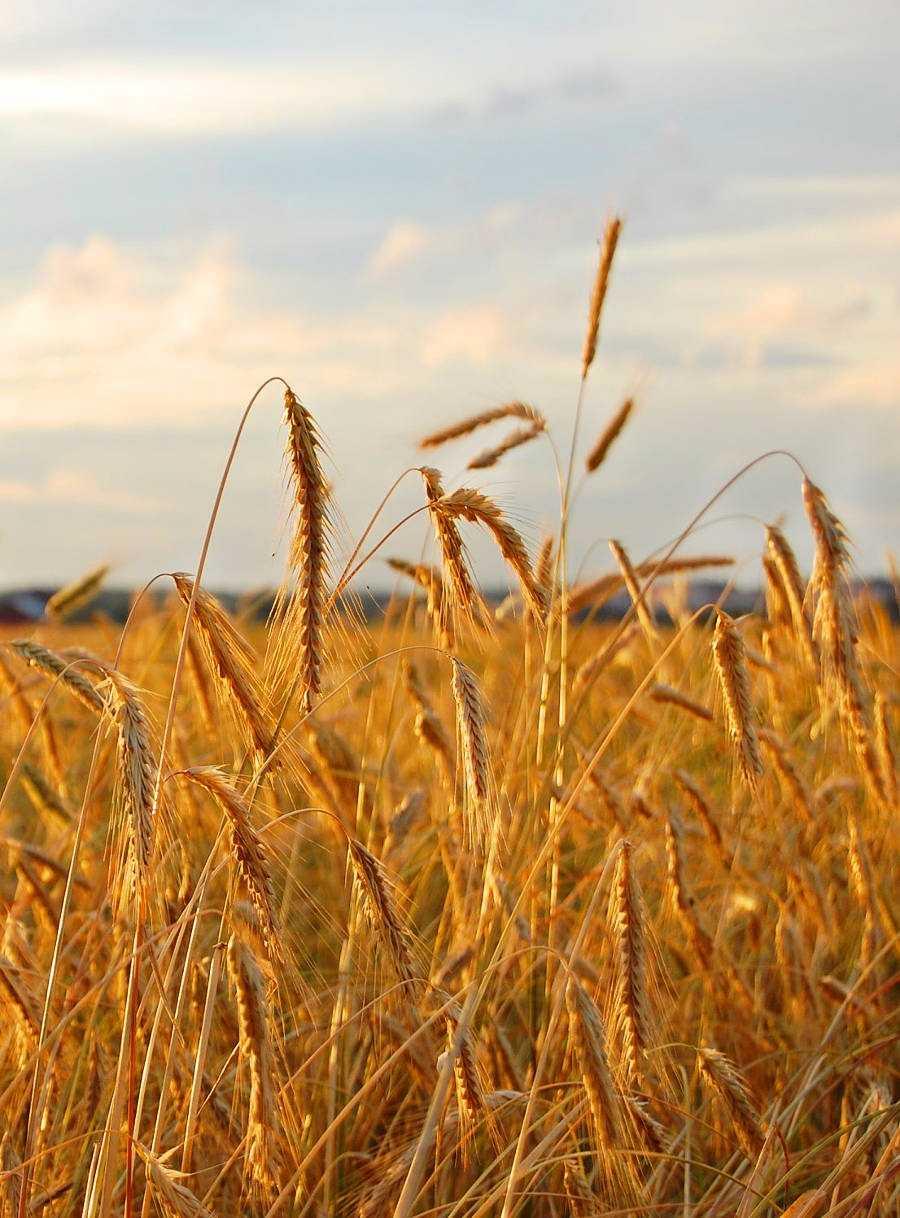 Фермерский кооператив получил одобрение расчетной палаты на продажу токенов